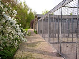 Hondenpension Antverpia Liberty